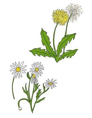 Flower nature quest