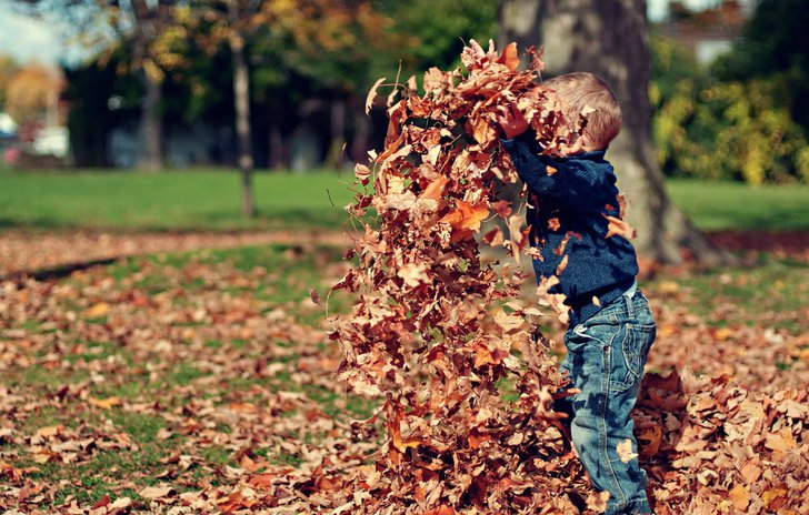 Autumn themed books and activities