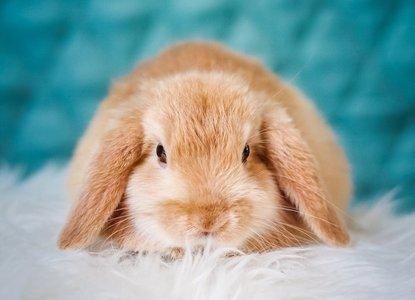 Little_Bunny_Foo_Foo.jpg