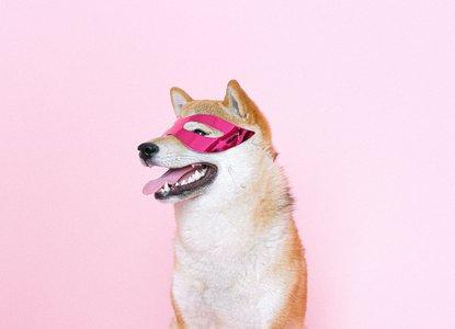 Dog in superhero mask.jpg