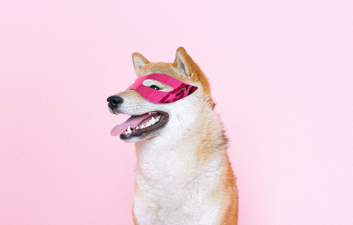 Dog in superhero mask.jpg