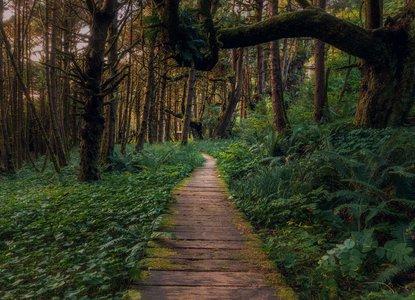 Jungle path