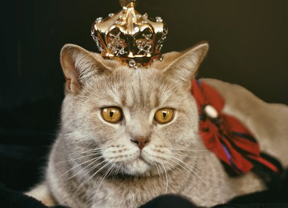 Kings and Queens cat