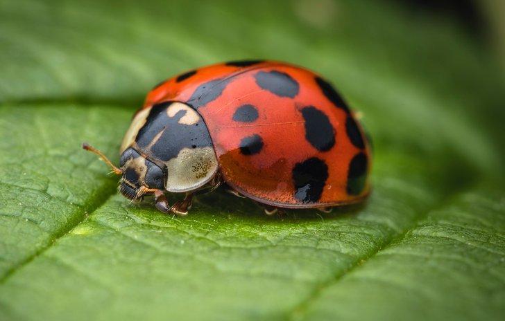 Ladybird nursery rhyme