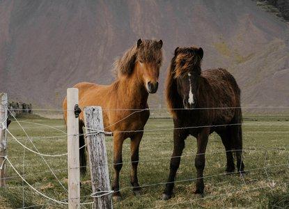 Horsie, horsie