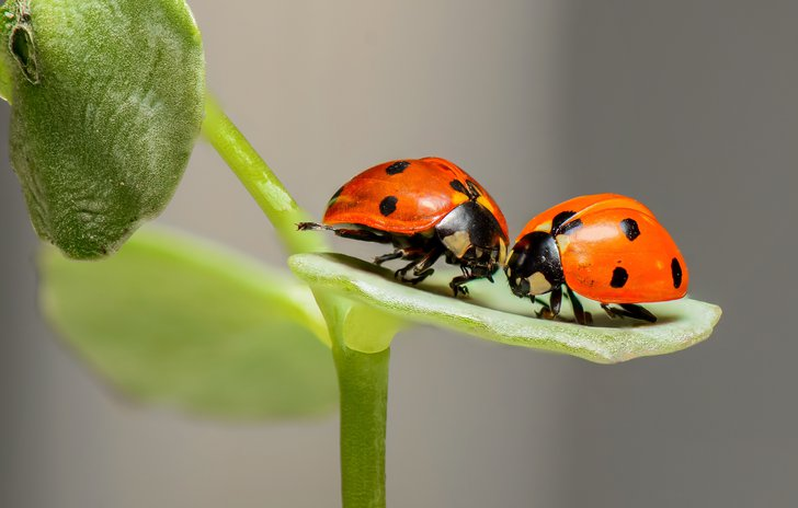 Do you love bugs? ladybird