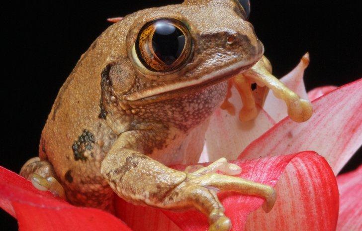 Speckled frog
